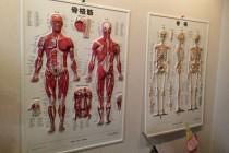 筋肉 骨格の図を見ながらきちんと説明します。
